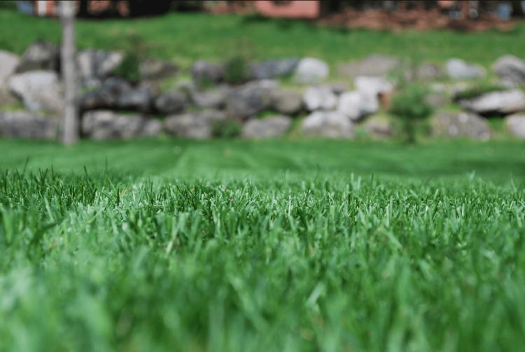 Lawn Service Port Orange - grass